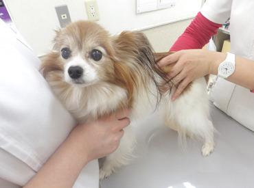 池田動物病院の画像・写真
