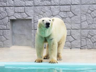 (株)文教スタヂオ ※勤務地:日本平動物園の画像・写真