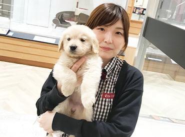 ペットショップワンラブ カインズ蓮田店 ※2021年3月12日OPENの画像・写真