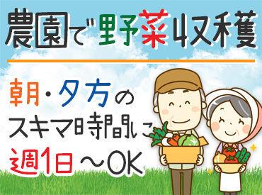 佐藤農園の画像・写真