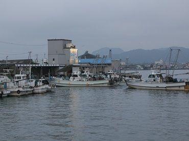 徳島魚市場株式会社の画像・写真