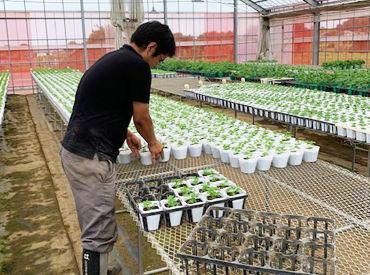 野菜苗の落合の画像・写真