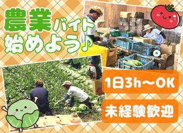 株式会社福島農園の画像・写真