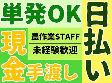株式会社菜果野アグリの画像・写真
