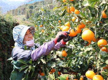 西宇和農業協同組合の画像・写真