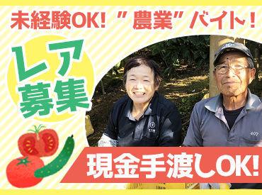 株式会社田中農園の画像・写真