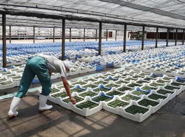 三和農林株式会社 井沼農場の画像・写真