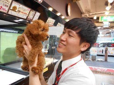 ペットの専門店コジマ 亀戸本店の画像・写真