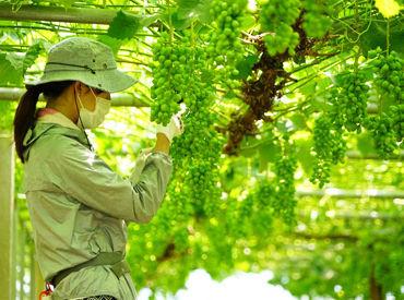 宮崎ぶどう園の画像・写真