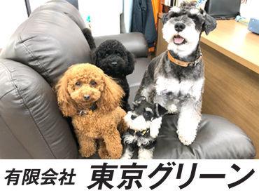 有限会社東京グリーンの画像・写真