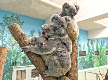 公益財団法人鹿児島市公園公社(平川動物公園)の画像・写真