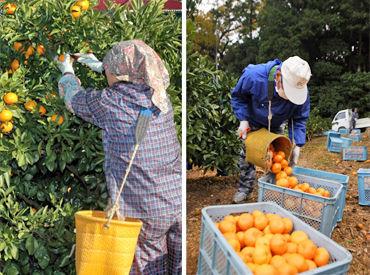 三ヶ日町農業協同組合の画像・写真