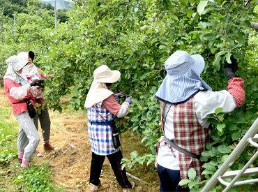 農事組合法人 梁川りんご生産組合の画像・写真