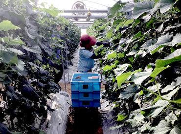 工藤農園の画像・写真