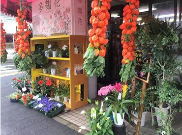 エフエル・クレイン多鶴花の画像・写真