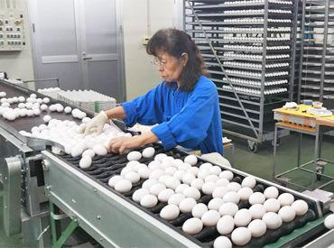 日本レイヤー株式会社 姫路農場の画像・写真