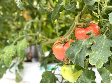 株式会社カゴシマ農園の画像・写真