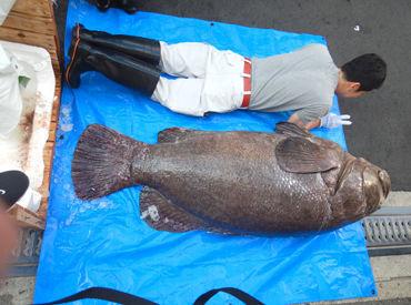 魚佳水産株式会社の画像・写真