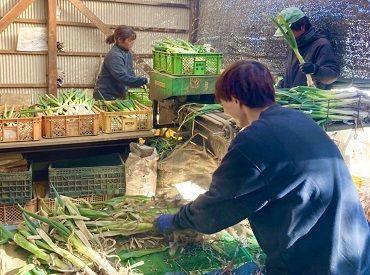 合同会社 野菜屋総合サービスの画像・写真