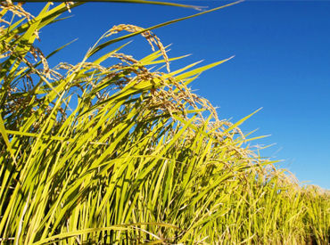株式会社新潟クボタ 米穀・肥料事業部の画像・写真