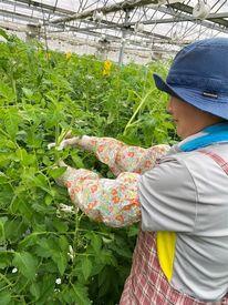 今井農園の画像・写真