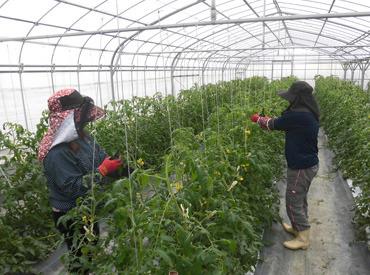 沖縄県農業協同組合の画像・写真