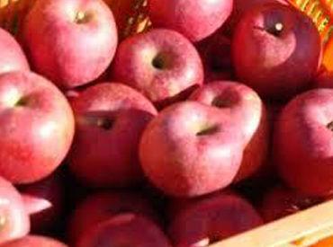 JAあづみ 果実中央選果所の画像・写真